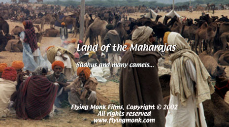 Sadhus and many camels